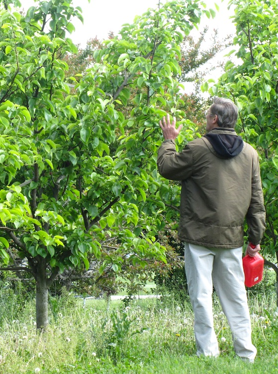 Checking on Fruit Trees