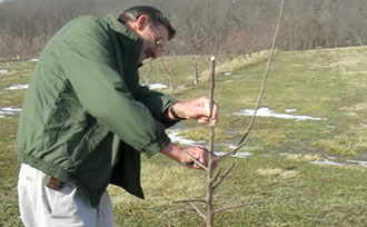 Successful Fruit Tree Pruning