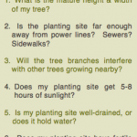 Questions to Ask Before Planting