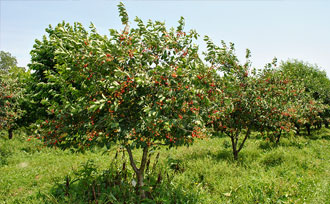 Fruit Tree Care Spray Weed Control