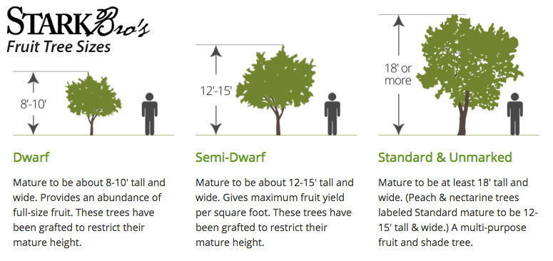 Mature Tree sizes