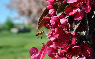 The Importance of Fruit Tree Pollination