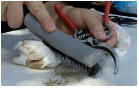 Tool Cleaning with Wire Brush for Caked-on Debris