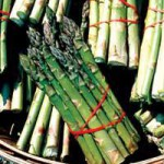 Jersey Knight Giant Asparagus