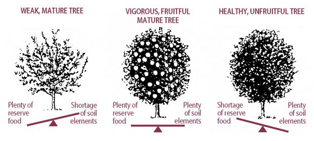 Nutrient Balance and Imbalance in Fruit Trees
