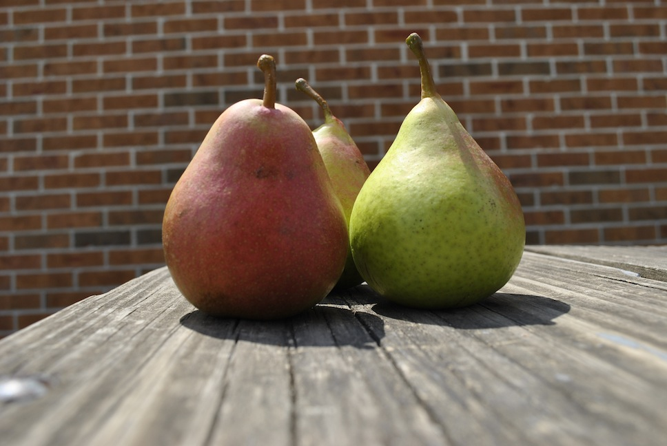 Mature Pears Harvested