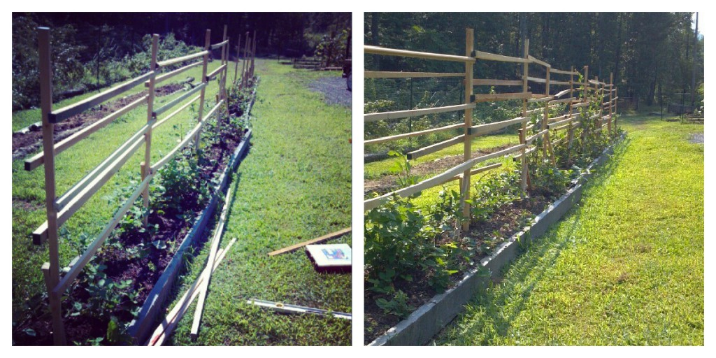 Homemade Berry Trellis
