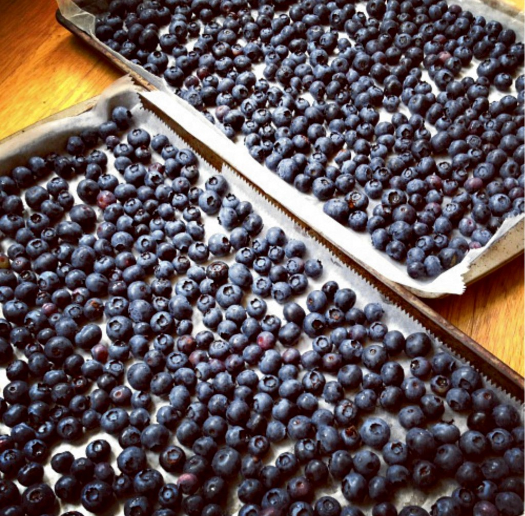 Blueberries on Cookie Sheets