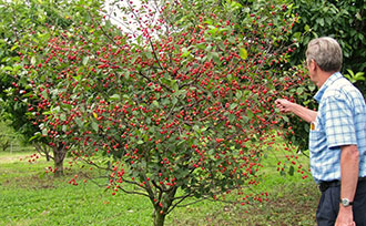 All About Dwarf Fruit Trees