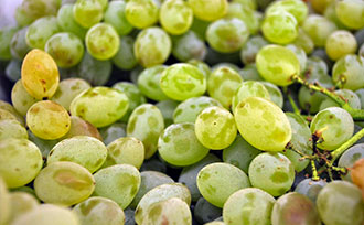 Growing Seedless Grapes