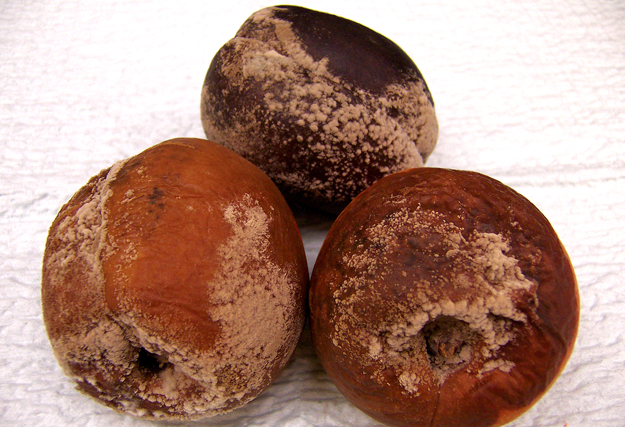 Brown Rot on Stone Fruits