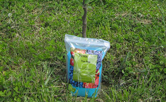 How to Fertilize New Fruit Trees