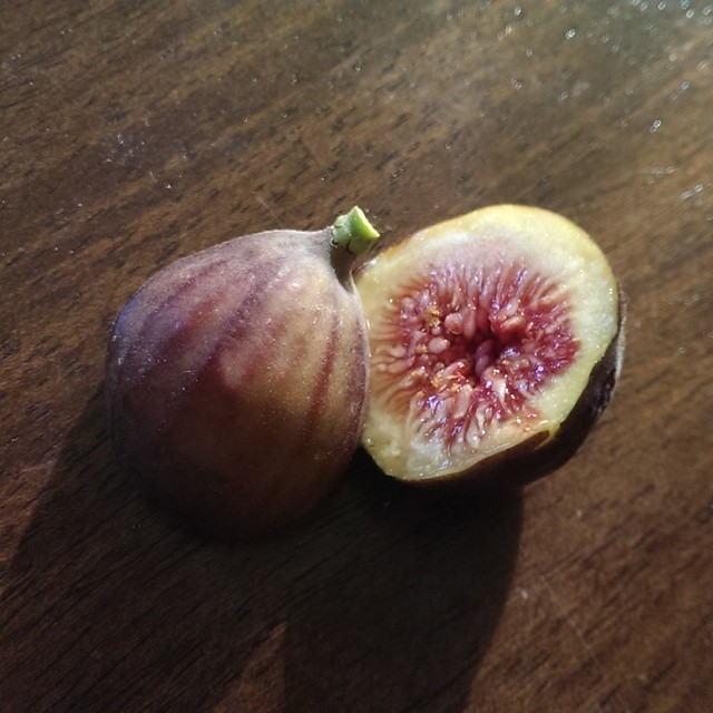Harvested Chicago Hardy Fig