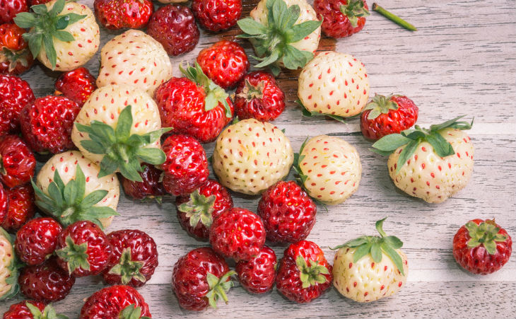 strawberries-red-and-white-730x451
