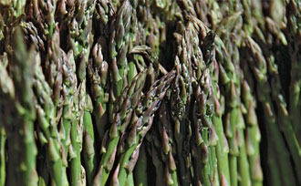 Planting & Growing Asparagus