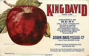 KingDavidApple