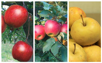 Introducing 3 Game-Changing New Apples