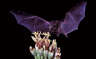 The Benefits of Bats