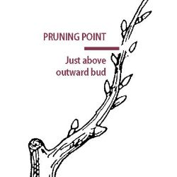 The Pruning Point