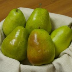 Photo of Anjou Pear