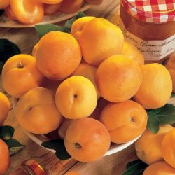Photo of Stark® SweetHeart™ Apricot