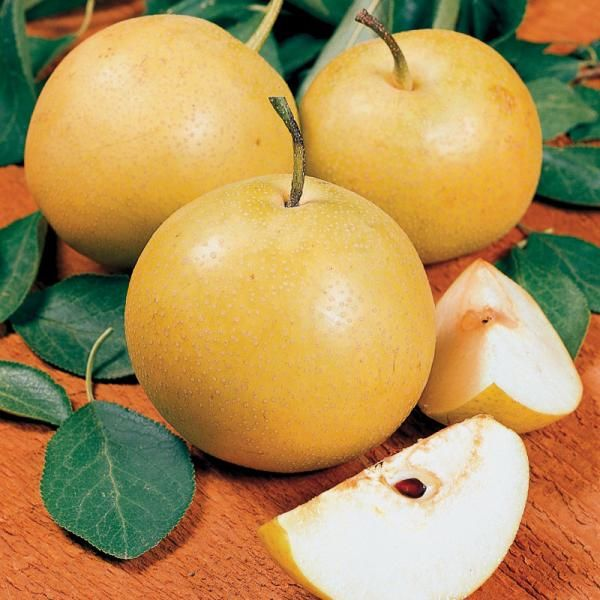mail Asian order pears