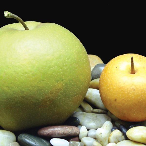 pear Grafting of multiple varieties asian
