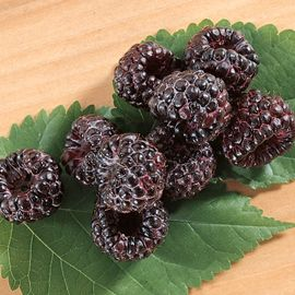 Photo of Allen Black Raspberry