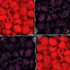 Family Raspberry Patch Collection