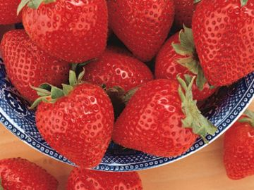 Tristar Everbearing Strawberry