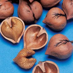 Photo of Heartnut