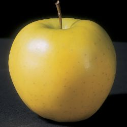 Photo of Mutsu Apple