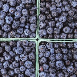 All-Season Blueberry Collection