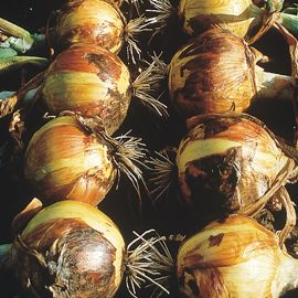 Photo of Walla Walla Sweet Onion