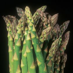 Asparagus Plant Collection