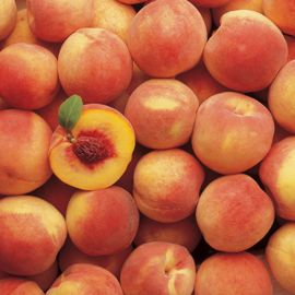 Hale Haven Peach