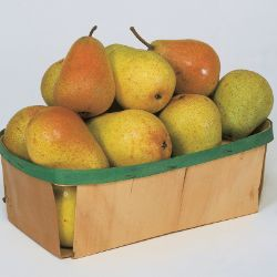 Photo of Colette Everbearing Pear