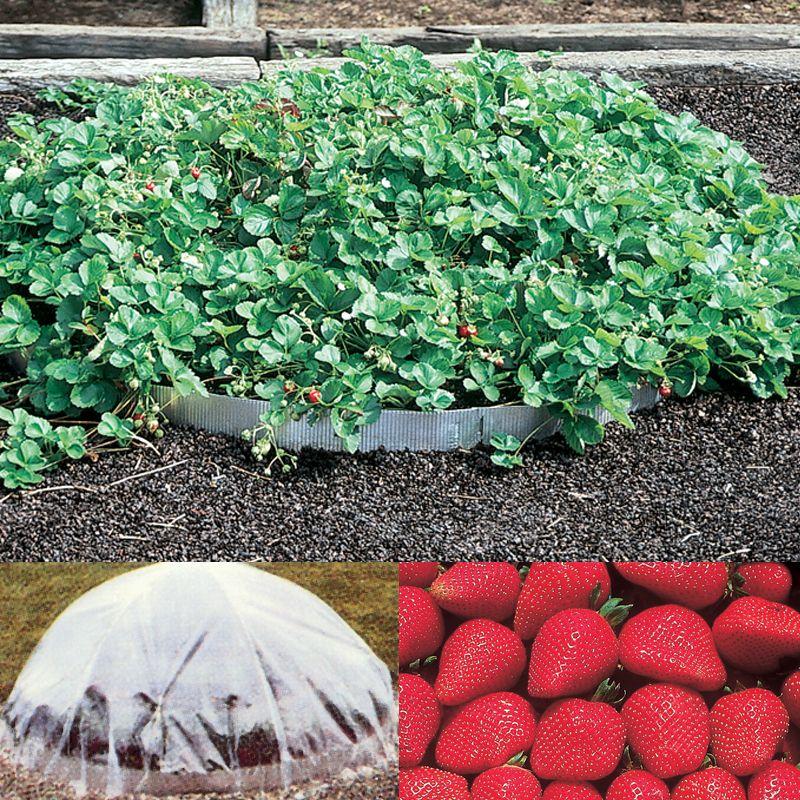3 Tier Strawberry Planter: Strawberry Pyramid Planter Assortment