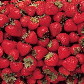 All Summer Long Strawberry Plant Collection