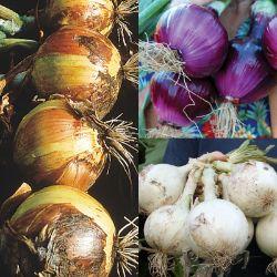 Vegetable Plants From Stark Bros Vegetable Plants For Sale