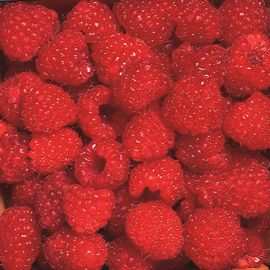 Killarney Red Raspberry