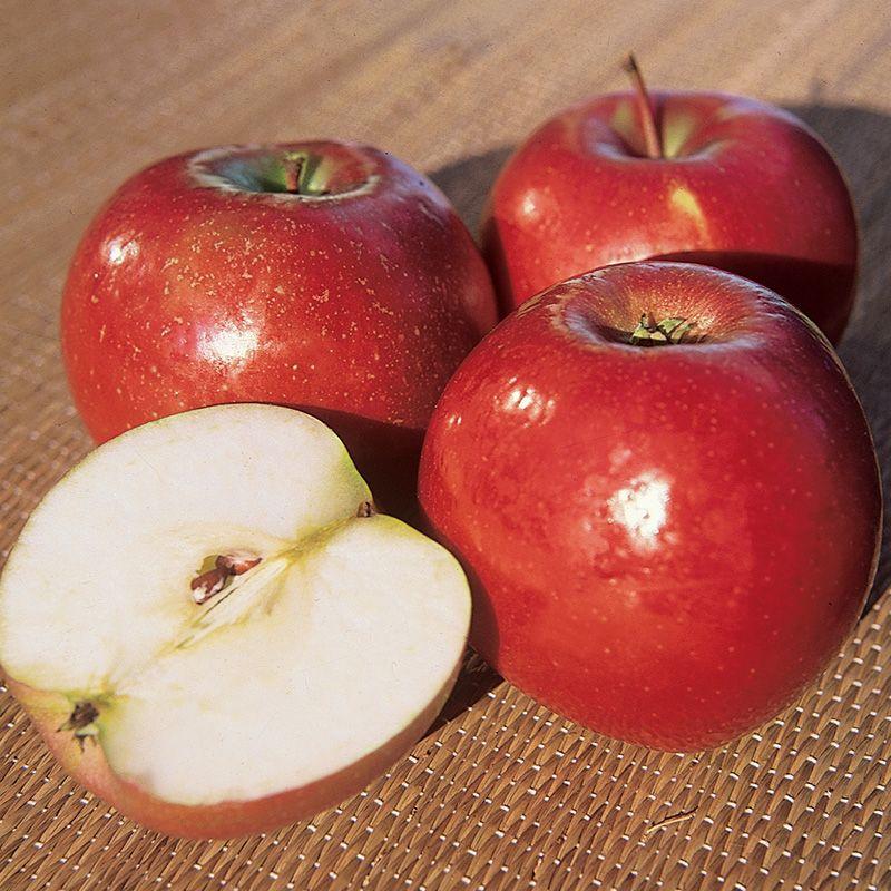 snow apple apple trees stark bros