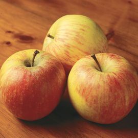 Photo of Red Astrachan Apple