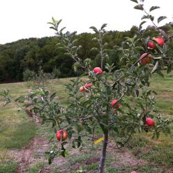 Dwarf Fruit Tree Orchard-In-A-Box®
