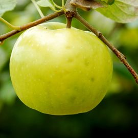 Best Fruit Trees for Canners Orchard-In-A-Box®