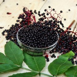 Photo of Elderberry Plant Collection