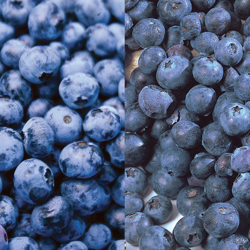 Blueberry Fruit Patio Blueberry...