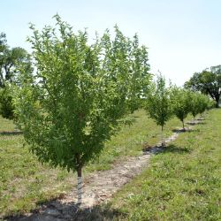 Cold-Hardy Fruit Tree Orchard-In-A-Box®