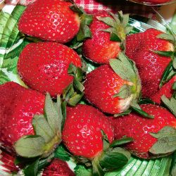 Photo of Honeoye Strawberry