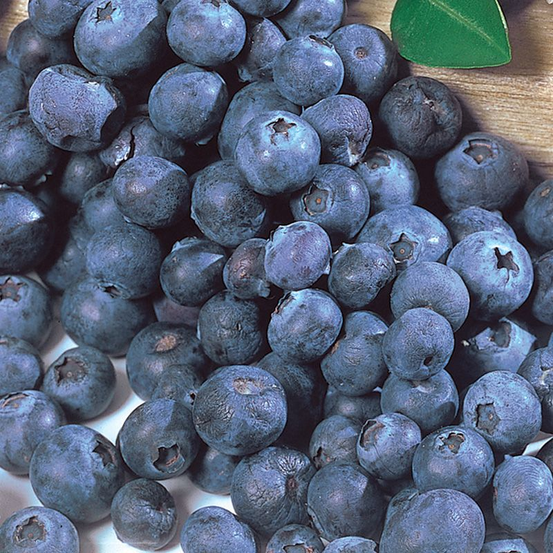 Blueberry Fruit Northcountry Blueberry...
